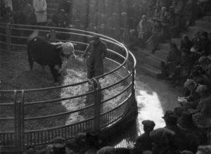 Centenary of the herd book